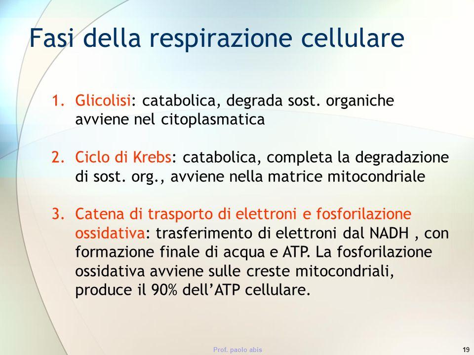 Prof. paolo abis19 1.Glicolisi: catabolica, degrada sost. organiche avviene nel citoplasmatica 2.Ciclo di Krebs: catabolica, completa la degradazione