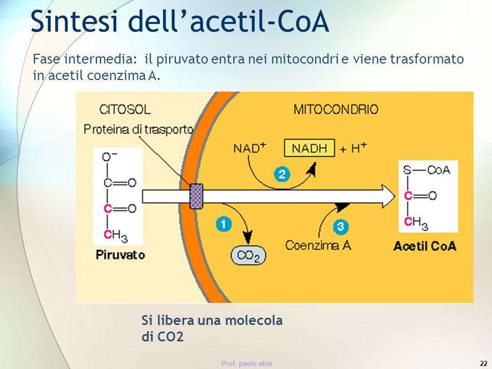Prof. paolo abis22 Fase intermedia: il piruvato entra nei mitocondri e viene trasformato in acetil coenzima A. Sintesi dellacetil-CoA Si libera una mo