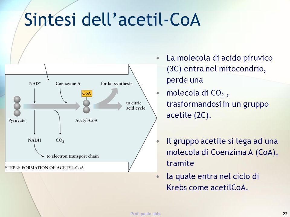 Prof. paolo abis23 Sintesi dellacetil-CoA La molecola di acido piruvico (3C) entra nel mitocondrio, perde una molecola di CO 2, trasformandosi in un g