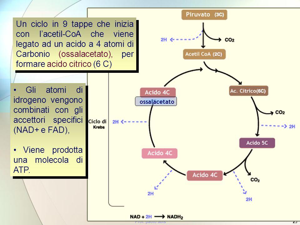 Prof. paolo abis25 Un ciclo in 9 tappe che inizia con lacetil-CoA che viene legato ad un acido a 4 atomi di Carbonio (ossalacetato), per formare acido