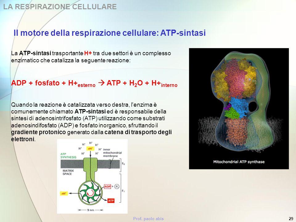 Prof. paolo abis29 LA RESPIRAZIONE CELLULARE La ATP-sintasi trasportante H+ tra due settori è un complesso enzimatico che catalizza la seguente reazio