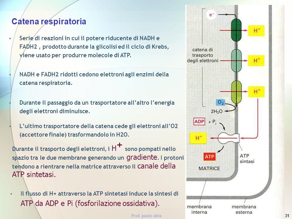 Prof. paolo abis31 Serie di reazioni in cui il potere riducente di NADH e FADH2, prodotto durante la glicolisi ed il ciclo di Krebs, viene usato per p