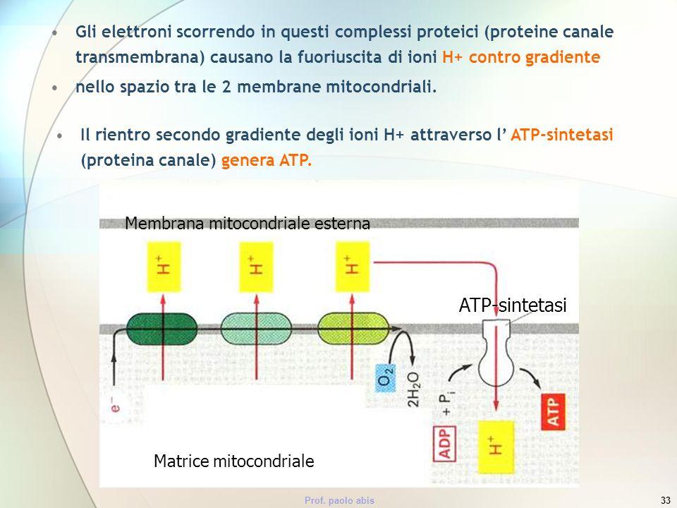 Prof. paolo abis33 Gli elettroni scorrendo in questi complessi proteici (proteine canale transmembrana) causano la fuoriuscita di ioni H+ contro gradi