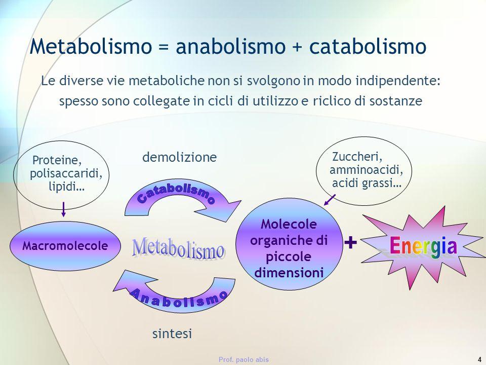 Prof. paolo abis4 Metabolismo = anabolismo + catabolismo Le diverse vie metaboliche non si svolgono in modo indipendente: spesso sono collegate in cic