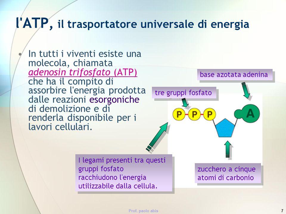 Prof. paolo abis7 l'ATP, il trasportatore universale di energia In tutti i viventi esiste una molecola, chiamata adenosin trifosfato (ATP) che ha il c