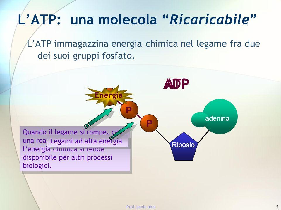 Prof. paolo abis9 LATP: una molecola Ricaricabile LATP immagazzina energia chimica nel legame fra due dei suoi gruppi fosfato. ATP adenina Ribosio P P