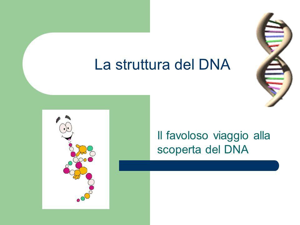Crick et Watson, 1953 Scoperta della struttura del DNA DNA = POLIMERO DI NUCLEOTIDI Ci sono 4 tipi di nucleotidi : A, T, C e G Come sono attaccati assieme ??.
