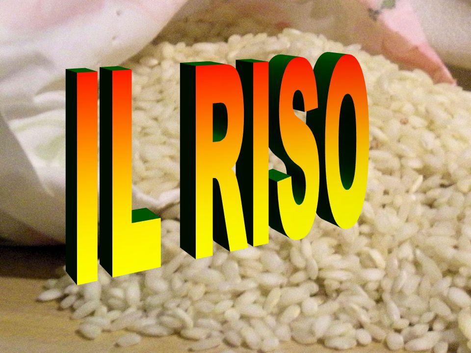 Il terreno coltivato a riso per più anni, e quindi sommerso, si trova, per tutta la durata della coltura, in condizioni riduttive, non del tutto favorevoli allo sviluppo delle radici.