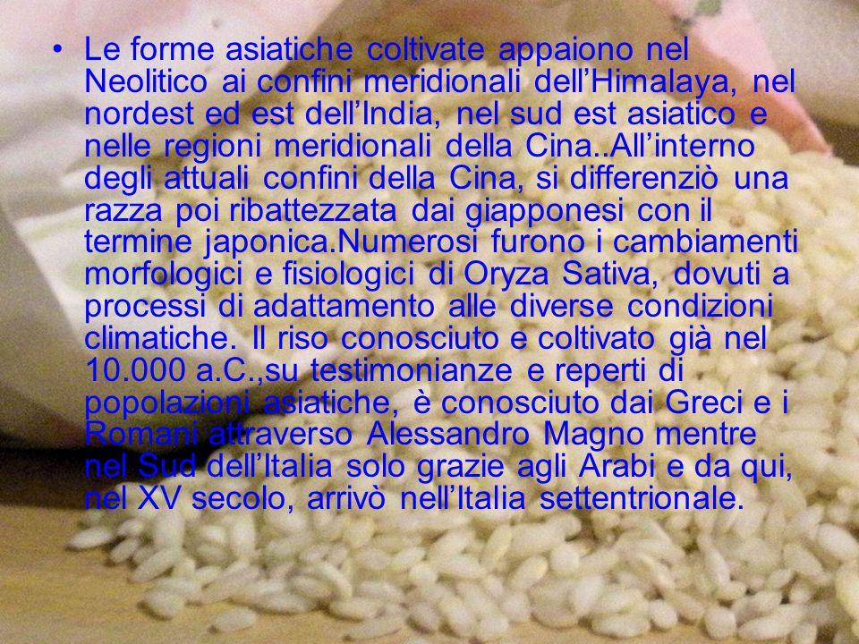 Nel 1475 il duca Gian Galeazzo Sforza dona al duca di Ferrara un sacco di riso che viene da lui definito in una lettera alimento estremamente interessante e meritevole di essere coltivato.Nei primi tre secoli di risicoltura italiana viene quindi utilizzata una miscela di forme con il nome di Nostrale.