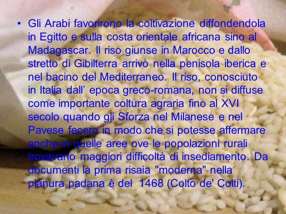 La pianta del riso nasce dal seme, detto anche chicco o cariosside, che costituisce il frutto di questa specie vegetale.