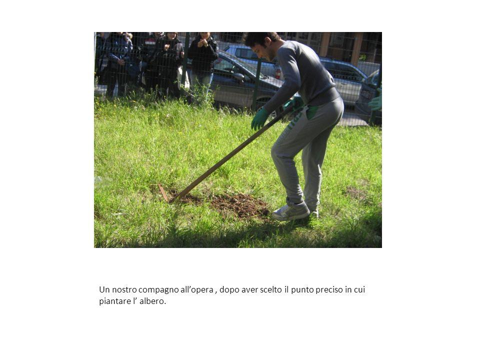 Un nostro compagno allopera, dopo aver scelto il punto preciso in cui piantare l albero.