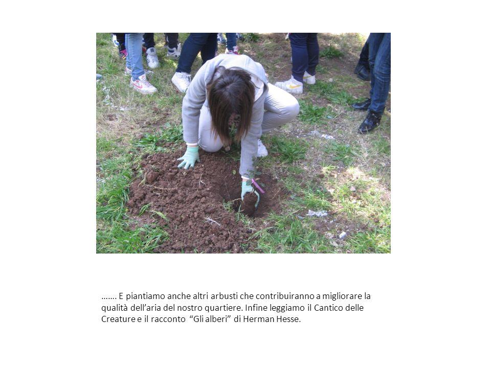 ……. E piantiamo anche altri arbusti che contribuiranno a migliorare la qualità dellaria del nostro quartiere. Infine leggiamo il Cantico delle Creatur