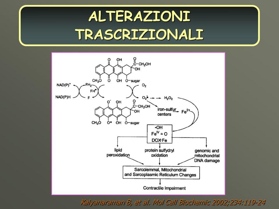 Kalyanaraman B, et al. Mol Cell Biochemic 2002;234:119-24 ALTERAZIONI TRASCRIZIONALI