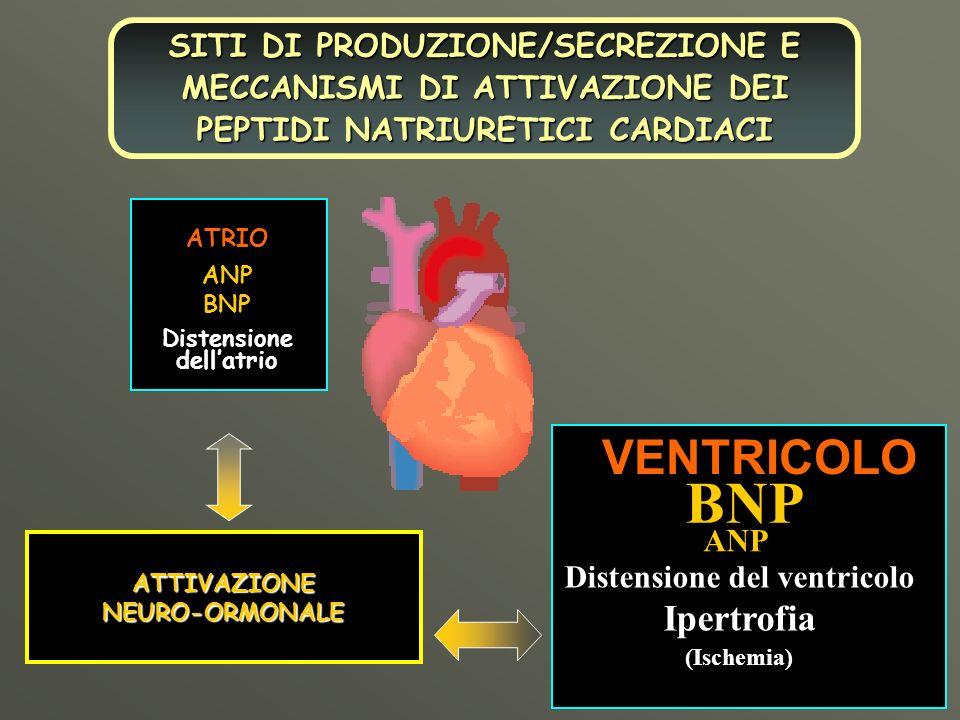 ANPBNP ATRIO Distensione dellatrio BNP ANPVENTRICOLO Distensione del ventricolo Ipertrofia(Ischemia) ATTIVAZIONENEURO-ORMONALE SITI DI PRODUZIONE/SECR
