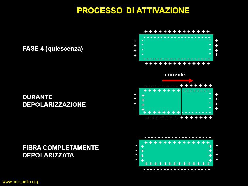 www.metcardio.org PROCESSO DI ATTIVAZIONE - - - - - - - - - - + + + + + + + + + + + -------- -------- FASE 4 (quiescenza) - - - - - - - - - - + + + +