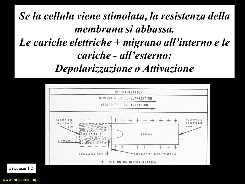 www.metcardio.org Se la cellula viene stimolata, la resistenza della membrana si abbassa. Le cariche elettriche + migrano allinterno e le cariche - al