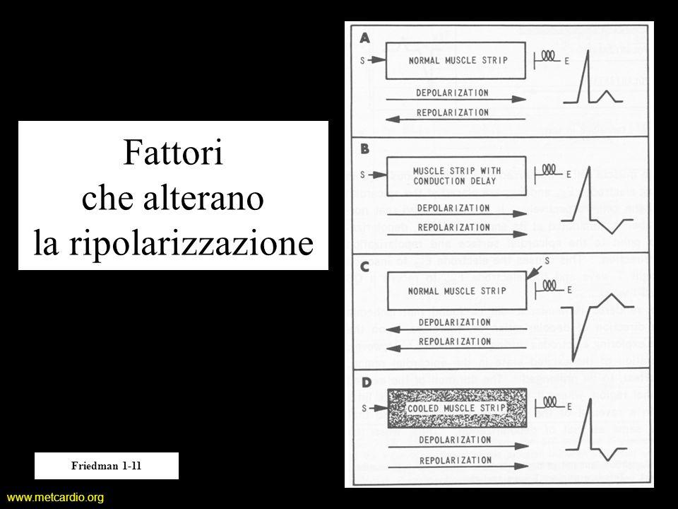 www.metcardio.org Fattori che alterano la ripolarizzazione Friedman 1-11