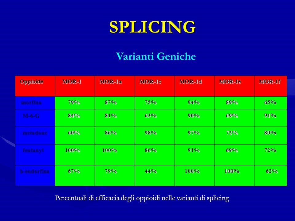 SPLICING SPLICING Oppioide Oppioide MOR-1 MOR-1 MOR-1a MOR-1a MOR-1c MOR-1c MOR-1d MOR-1d MOR-1e MOR-1e MOR-1f MOR-1f morfina morfina 79% 79% 87% 87% 75% 75% 94% 94% 89% 89% 65% 65% M-6-G M-6-G 84% 84% 81% 81% 63% 63% 90% 90% 69% 69% 91% 91% metadone metadone 60% 60% 86% 86% 98% 98% 97% 97% 72% 72% 80% 80% fentanyl fentanyl 100% 100% 86% 86% 91% 91% 69% 69% 72% 72% b-endorfina b-endorfina 67% 67% 79% 79% 44% 44% 100% 100% 62% 62% Percentuali di efficacia degli oppioidi nelle varianti di splicing Varianti Geniche