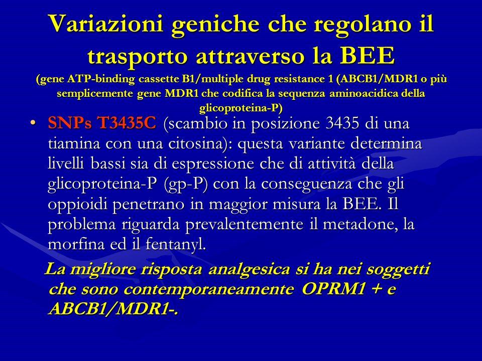 Variazioni geniche che regolano il trasporto attraverso la BEE (gene ATP-binding cassette B1/multiple drug resistance 1 (ABCB1/MDR1 o più semplicemente gene MDR1 che codifica la sequenza aminoacidica della glicoproteina-P) SNPs T3435C (scambio in posizione 3435 di una tiamina con una citosina): questa variante determina livelli bassi sia di espressione che di attività della glicoproteina-P (gp-P) con la conseguenza che gli oppioidi penetrano in maggior misura la BEE.