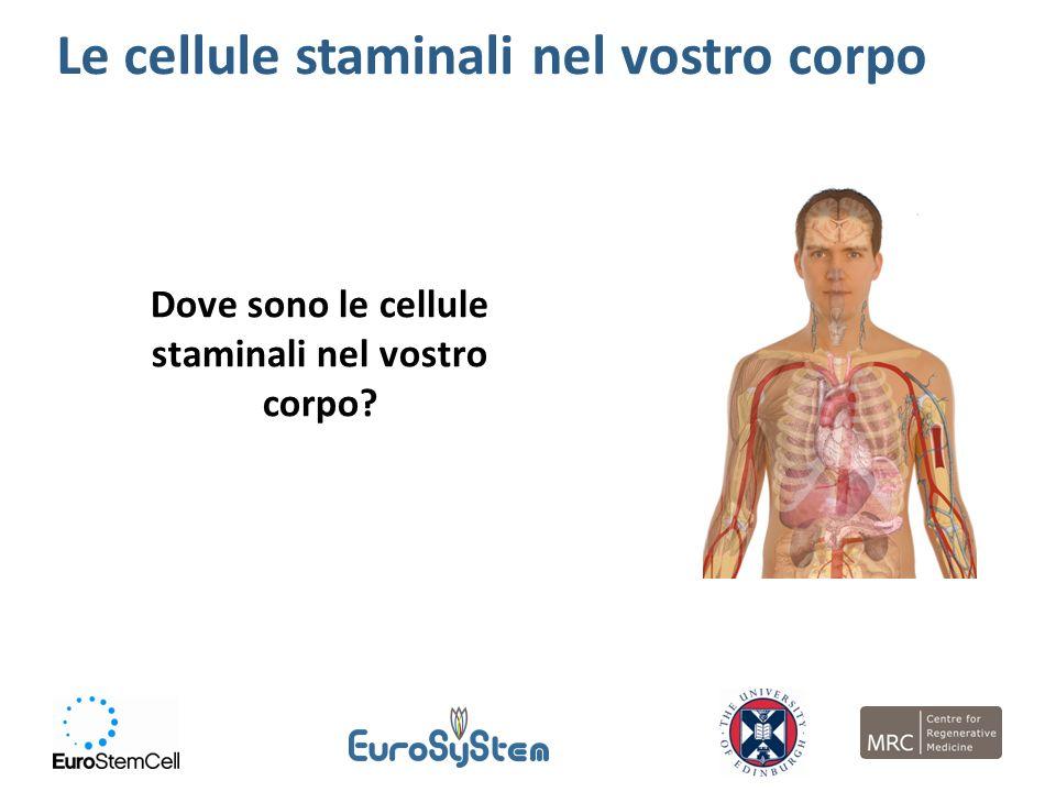Dove sono le cellule staminali nel vostro corpo? Le cellule staminali nel vostro corpo