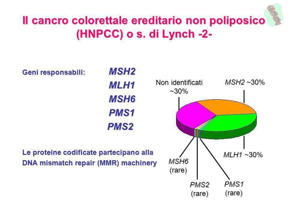 Il cancro colorettale ereditario non poliposico (HNPCC) o s. di Lynch -2- Geni responsabili: MSH2 MLH1MSH6PMS1 PMS2 PMS2 Le proteine codificate partec