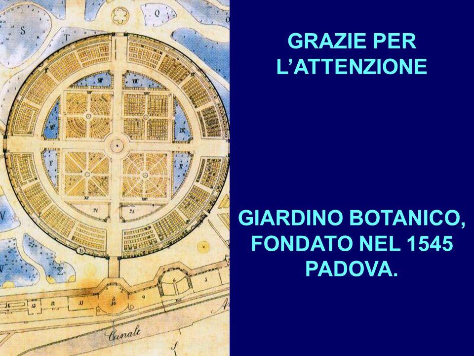 GRAZIE PER LATTENZIONE GIARDINO BOTANICO, FONDATO NEL 1545 PADOVA.