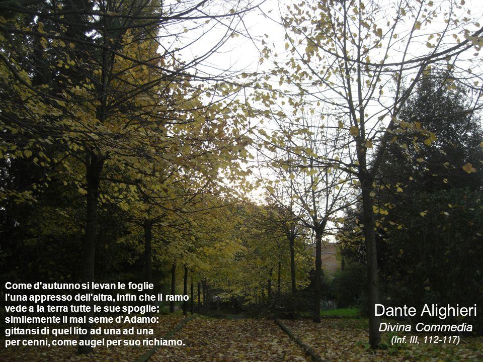 Come d'autunno si levan le foglie l'una appresso dell'altra, infin che il ramo vede a la terra tutte le sue spoglie; similemente il mal seme d'Adamo: