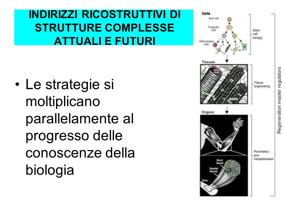 INDIRIZZI RICOSTRUTTIVI DI STRUTTURE COMPLESSE ATTUALI E FUTURI Le strategie si moltiplicano parallelamente al progresso delle conoscenze della biolog