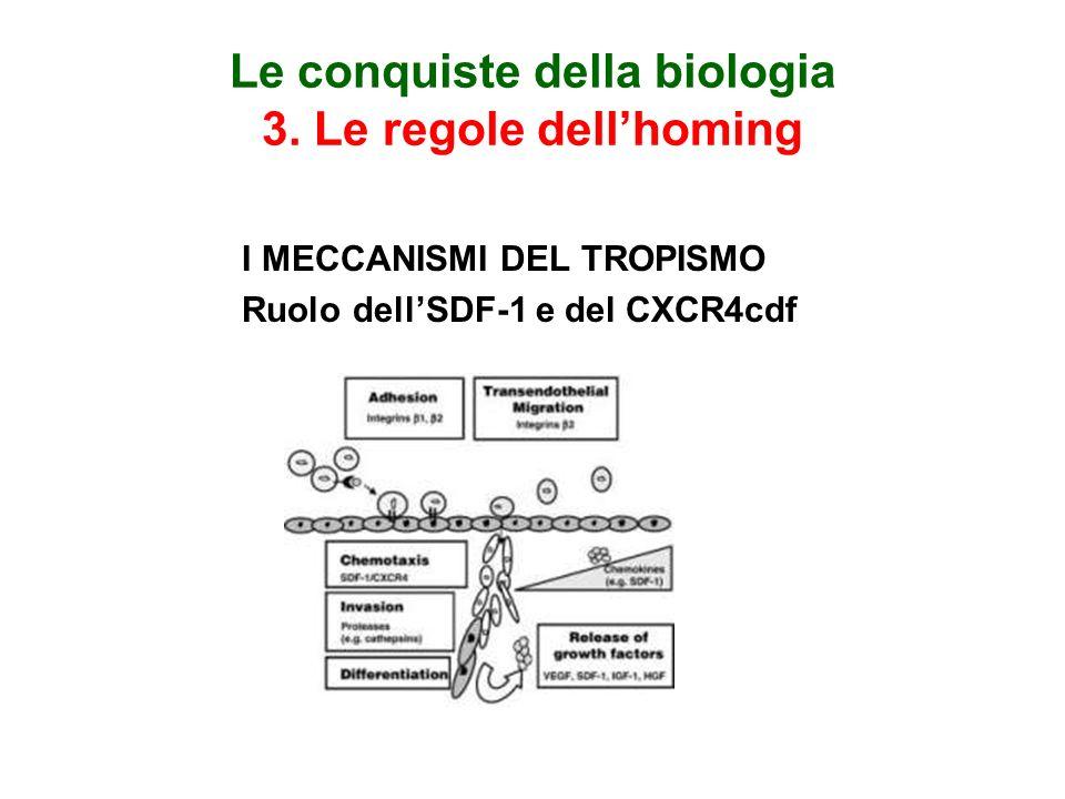 Le conquiste della biologia 3. Le regole dellhoming I MECCANISMI DEL TROPISMO Ruolo dellSDF-1 e del CXCR4cdf