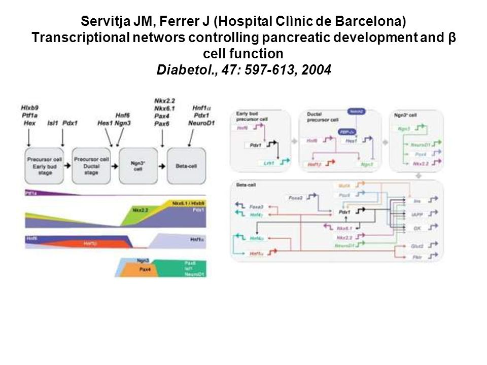 Servitja JM, Ferrer J (Hospital Clìnic de Barcelona) Transcriptional networs controlling pancreatic development and β cell function Diabetol., 47: 597