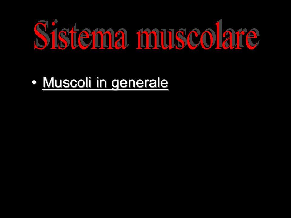 Muscoli in generaleMuscoli in generale 1.Le proprietà del muscolo 2.Struttura dei muscoli scheletrici
