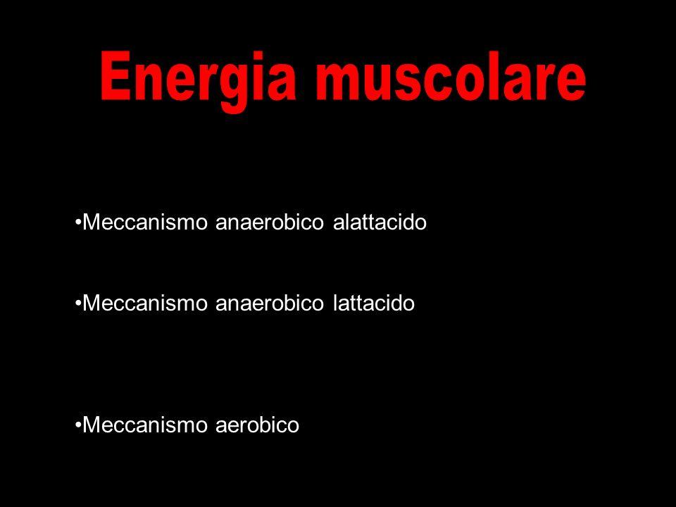 Meccanismo anaerobico alattacido Meccanismo anaerobico lattacido Meccanismo aerobico