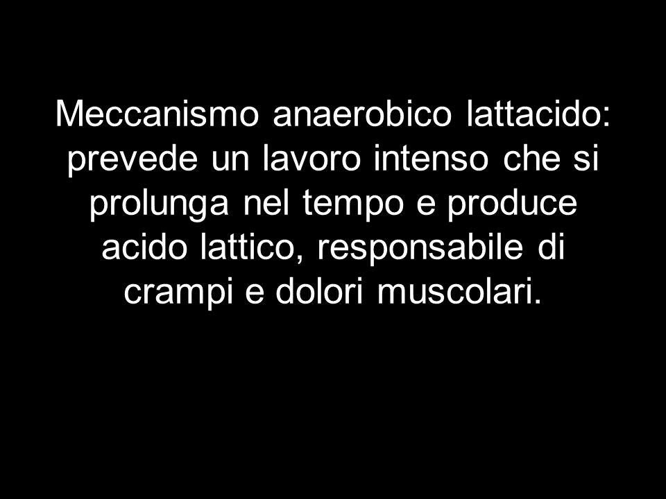 Meccanismo anaerobico lattacido: prevede un lavoro intenso che si prolunga nel tempo e produce acido lattico, responsabile di crampi e dolori muscolar