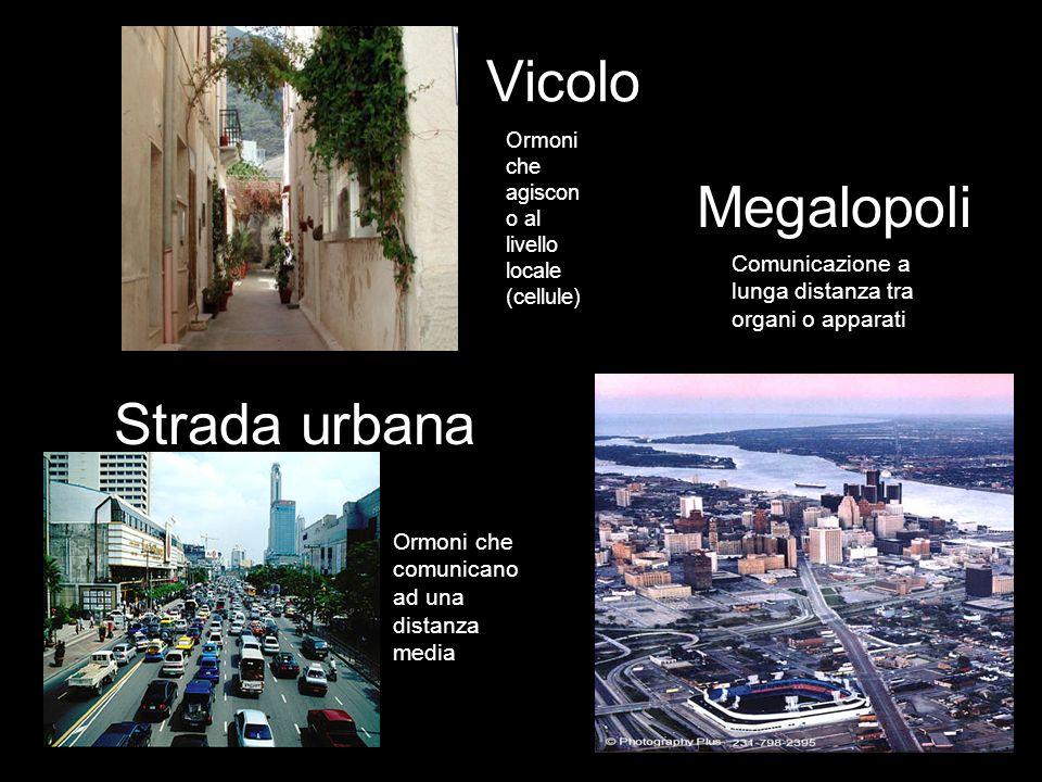 Vicolo Strada urbana Megalopoli Ormoni che agiscon o al livello locale (cellule) Ormoni che comunicano ad una distanza media Comunicazione a lunga dis