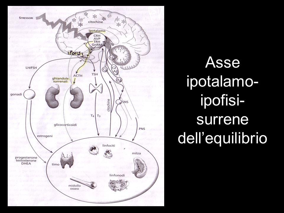 Asse ipotalamo- ipofisi- surrene dellequilibrio