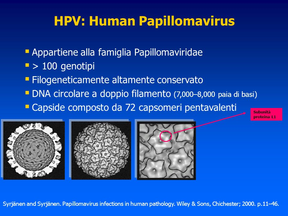 Proteine L1 55-57 kD 5L1 72 CAPSOMERI Pentamero L1 280 kD Capside virale 20000 kD Particelle simil-virali (VLPs, Virus Like Particles) Produzione VLP: Lieviti ricombinanti Saccharomyces cerevisiae