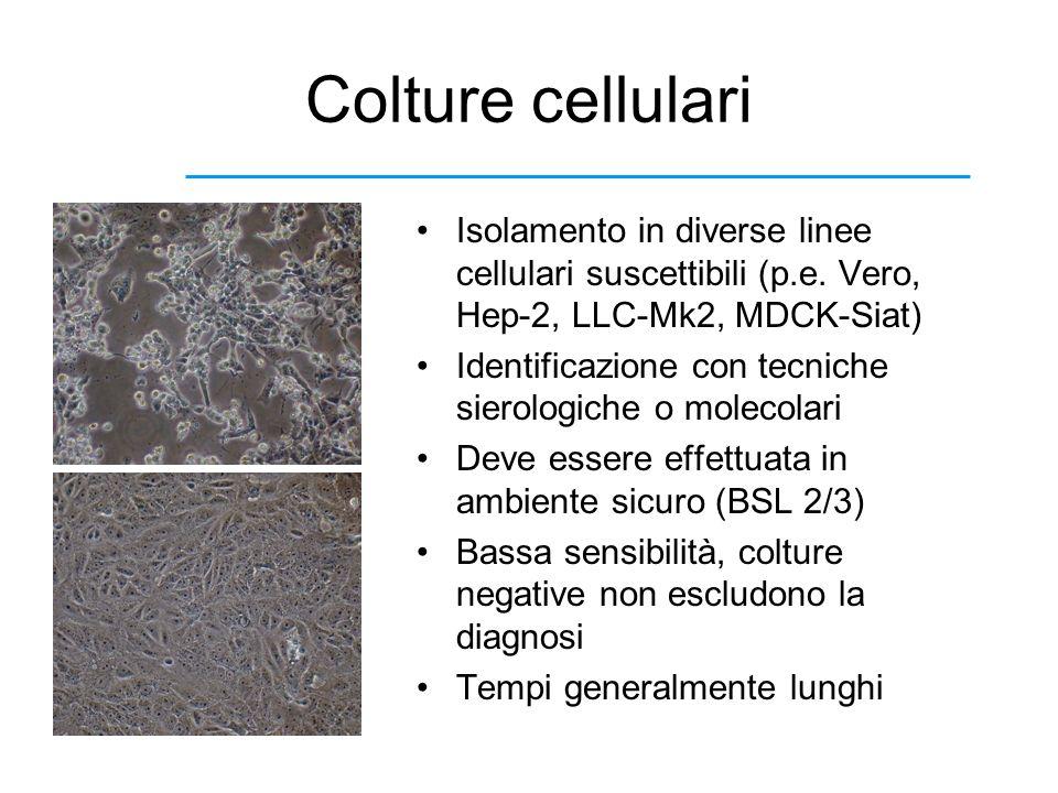 Colture cellulari Isolamento in diverse linee cellulari suscettibili (p.e. Vero, Hep-2, LLC-Mk2, MDCK-Siat) Identificazione con tecniche sierologiche