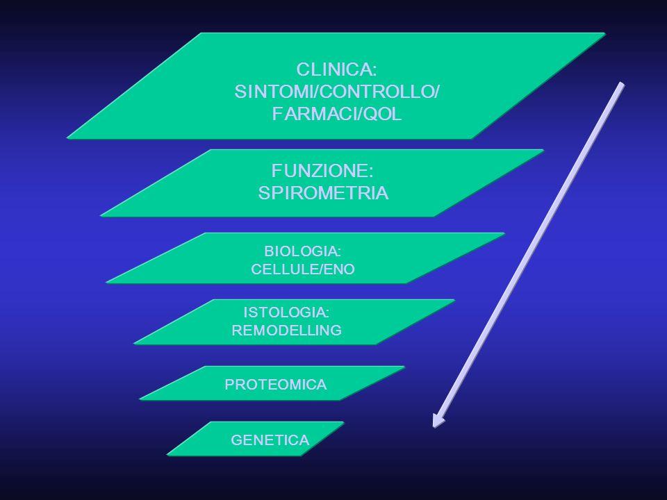 CLINICA: SINTOMI/CONTROLLO/ FARMACI/QOL FUNZIONE: SPIROMETRIA BIOLOGIA: CELLULE/ENO PROTEOMICA ISTOLOGIA: REMODELLING GENETICA
