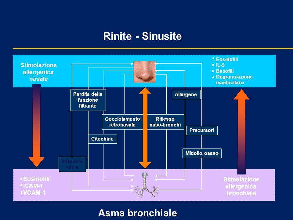 Rinite - Sinusite Asma bronchiale Stimolazione allergenica bronchiale Eosinofili IL-5 Basofili Degranulazione mastocitaria Eosinofili ICAM-1 VCAM-1 St