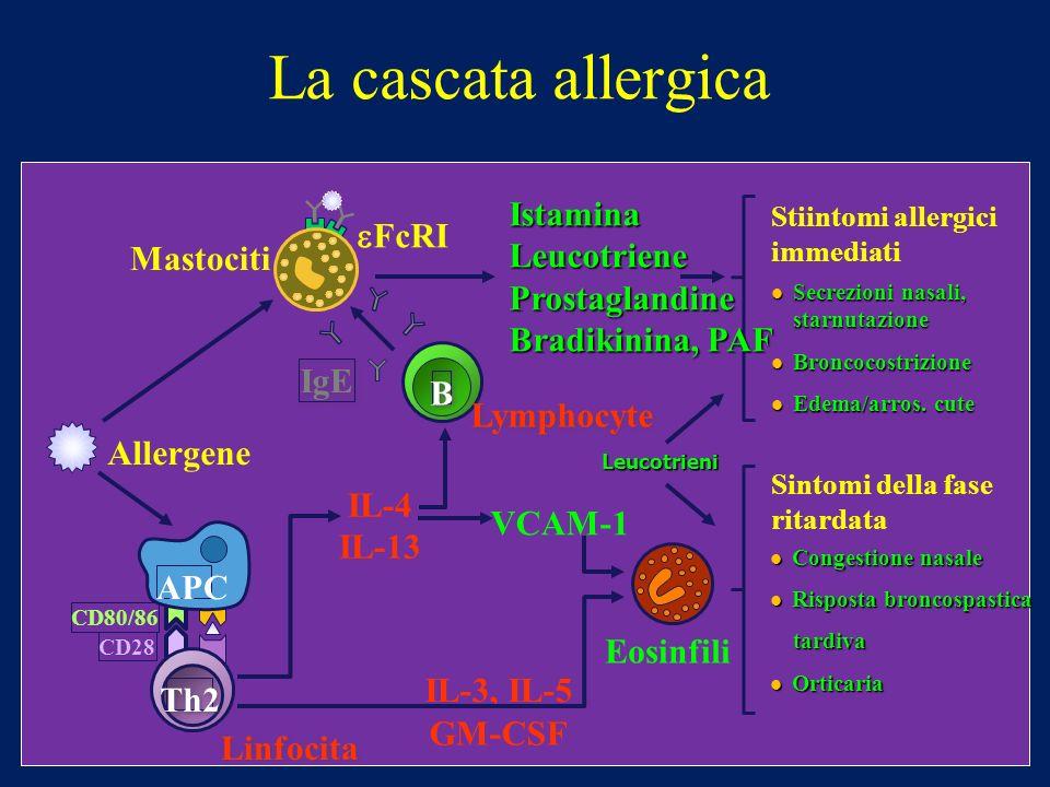 La cascata allergica Secrezioni nasali, starnutazione Secrezioni nasali, starnutazione Broncocostrizione Broncocostrizione Edema/arros. cute Edema/arr