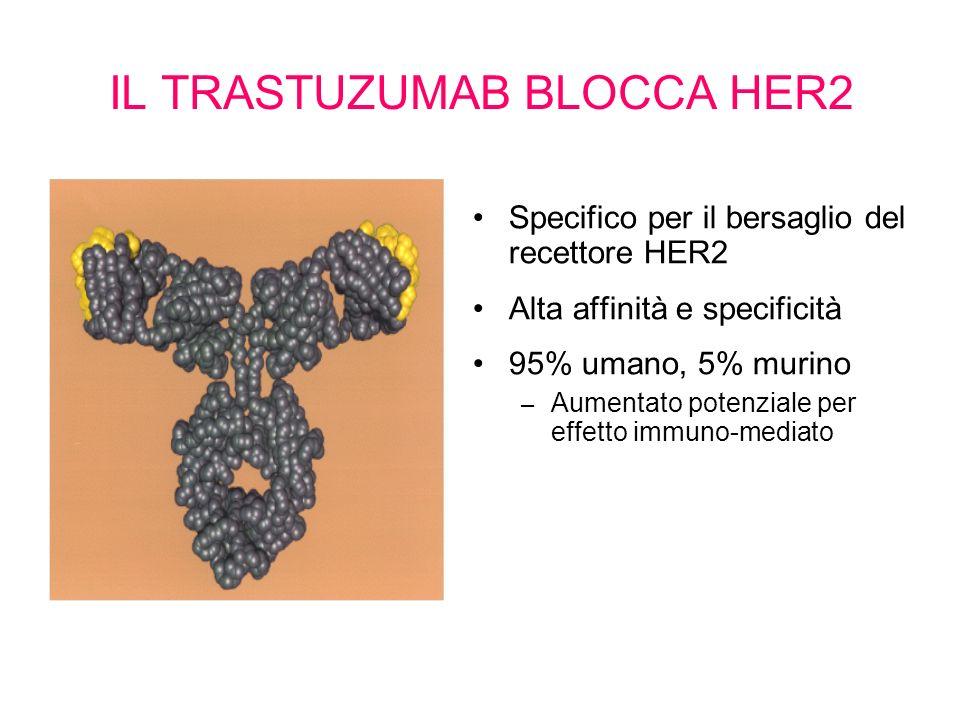 IL TRASTUZUMAB BLOCCA HER2 Specifico per il bersaglio del recettore HER2 Alta affinità e specificità 95% umano, 5% murino – Aumentato potenziale per e