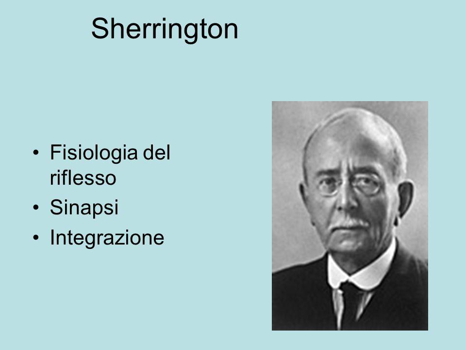 Sherrington Fisiologia del riflesso Sinapsi Integrazione