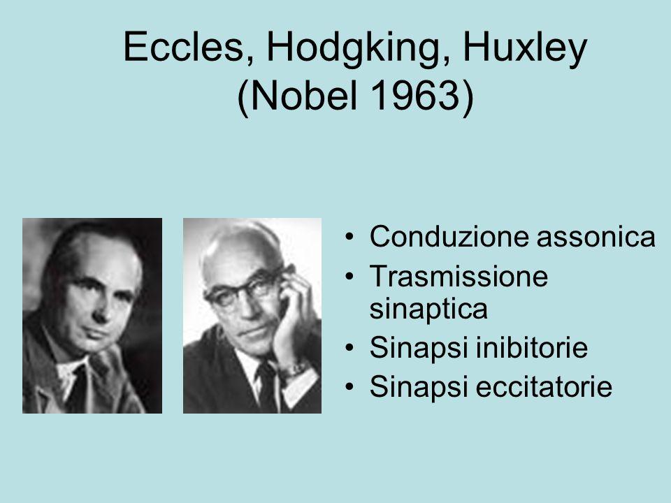 Eccles, Hodgking, Huxley (Nobel 1963) Conduzione assonica Trasmissione sinaptica Sinapsi inibitorie Sinapsi eccitatorie