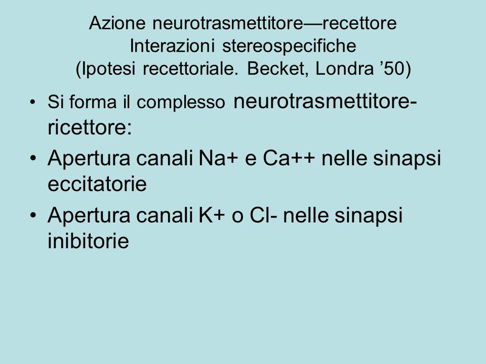 Azione neurotrasmettitorerecettore Interazioni stereospecifiche (Ipotesi recettoriale. Becket, Londra 50) Si forma il complesso neurotrasmettitore- ri