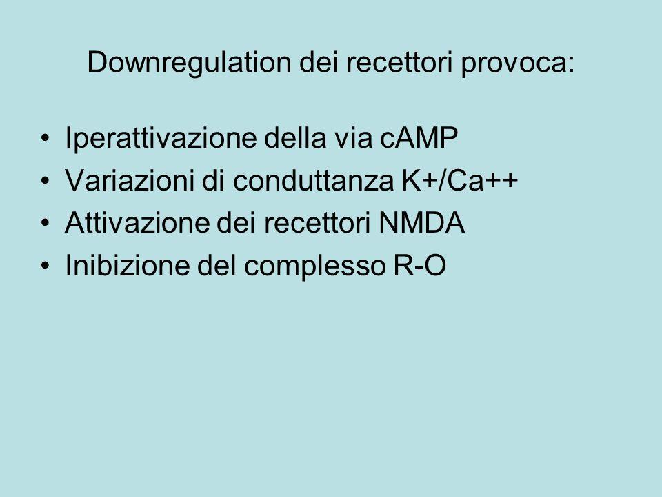 Downregulation dei recettori provoca: Iperattivazione della via cAMP Variazioni di conduttanza K+/Ca++ Attivazione dei recettori NMDA Inibizione del c