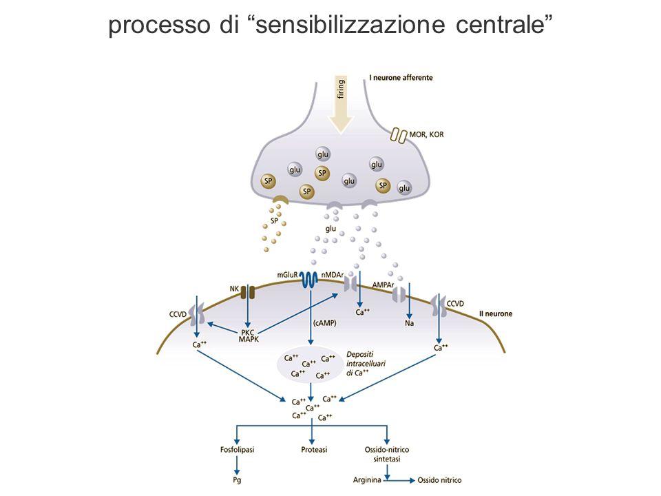 processo di sensibilizzazione centrale