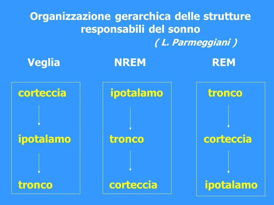 Organizzazione gerarchica delle strutture responsabili del sonno ( L. Parmeggiani ) Veglia NREM REM corteccia ipotalamo tronco ipotalamo tronco cortec