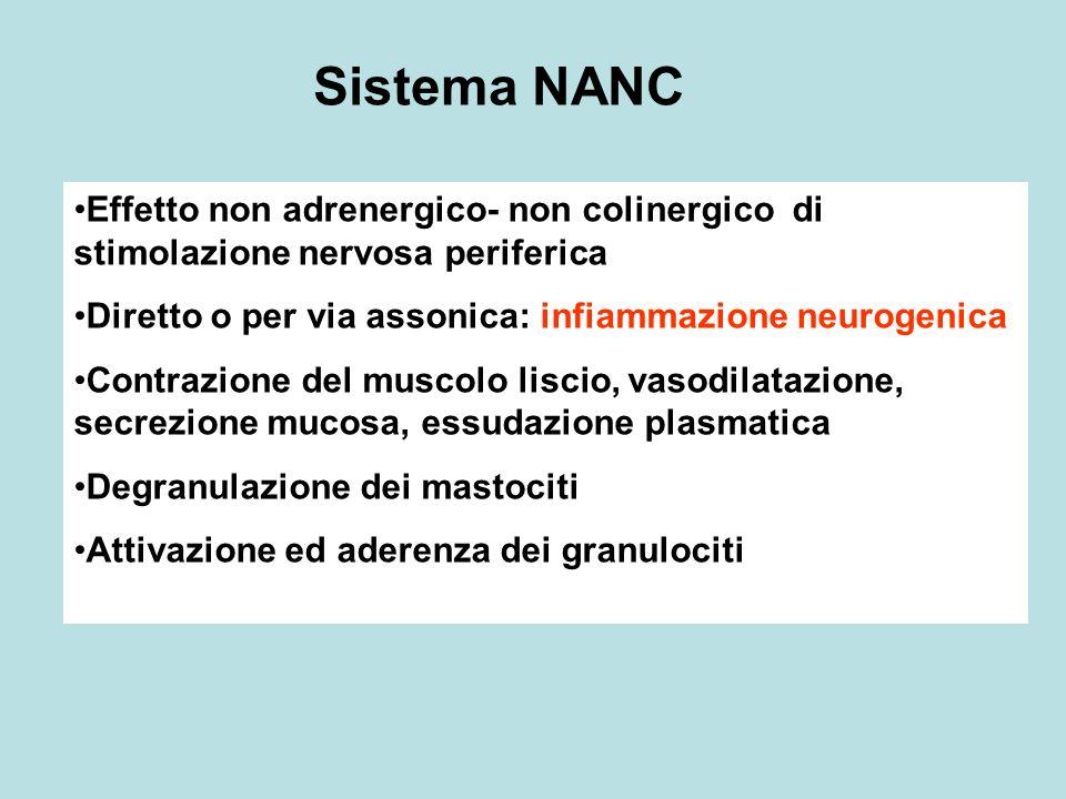 Sistema NANC Effetto non adrenergico- non colinergico di stimolazione nervosa periferica Diretto o per via assonica: infiammazione neurogenica Contraz
