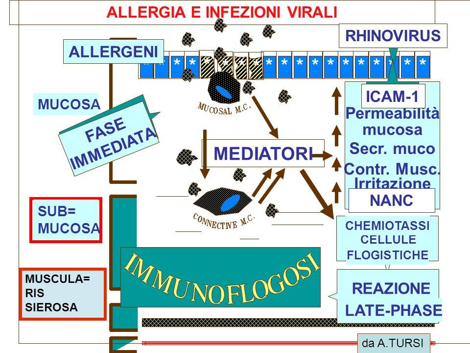 ALLERGIA E INFEZIONI VIRALI *************** MEDIATORI Permeabilità mucosa Secr. muco Contr. Musc. Irritazione Fibre Nerv. MUCOSA SUB= MUCOSA FASE IMME