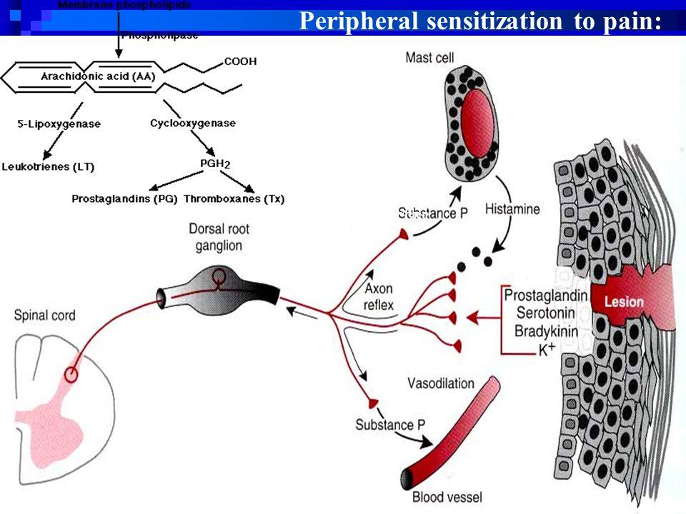 CGRP Peripheral sensitization to pain: